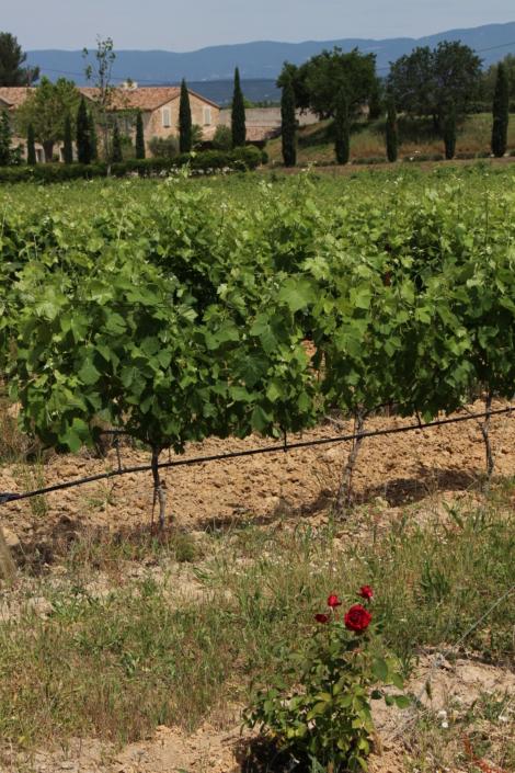 Vignes-Château-Paradis