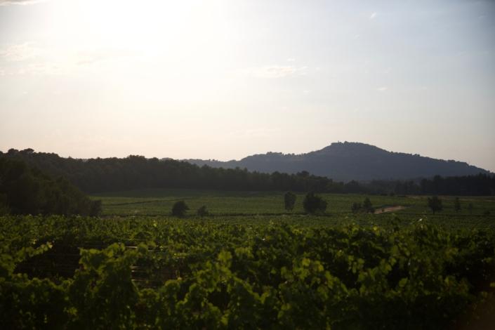 Château Paradis Vignes